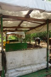 Cuzama Cenotes Merida Day Trip - Destination Spotlight: Mérida, Mexico | Part 3 | Exploring Cuzama and Los 3 Cenotes