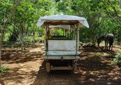 Horse Truck Cart Cuzama Cenotes Merida